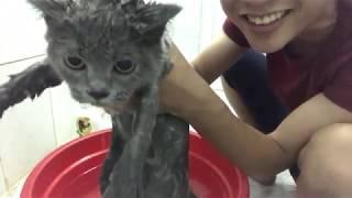 Vũ Liz Tắm Cho Các Mèo Và Bị Cào Rách Hết Chân Tay !!