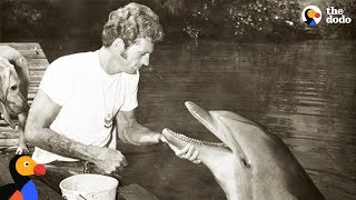 Former Dolphin Hunter Devotes His Life To Saving Dolphins   The Dodo