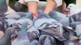 Feeding Pigeons at Jain Temple in Mattancherry, Kochi