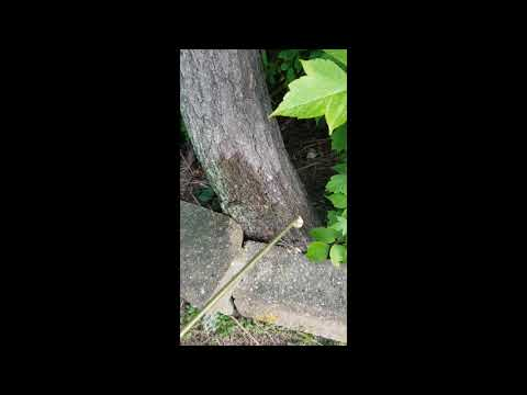 Old Tree Invites Carpenter Ants to Infest Home in Monmouth Beach, NJ