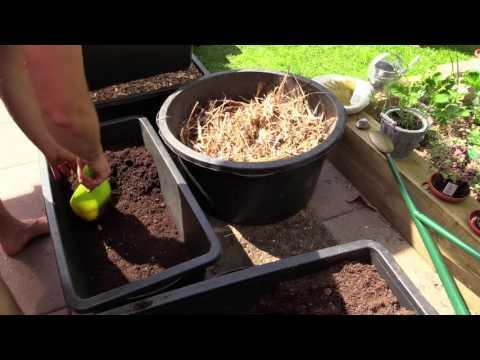 Bütt als Pflanzgefäß - Vorbereiten und Befüllen