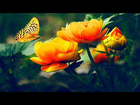 Poema A La Madre Tierra: 55 Versos Para El Planeta