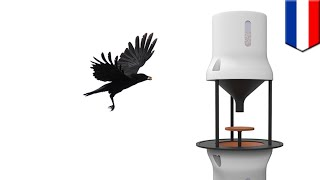 Crows Pick Up Cigarette Butts: Dutch Startup Training Birds To Pick Up Litter For Food - TomoNews