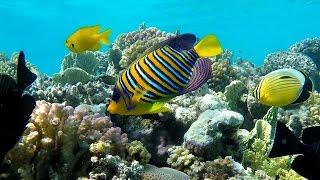 Рыбы Красного моря с названиями и описанием