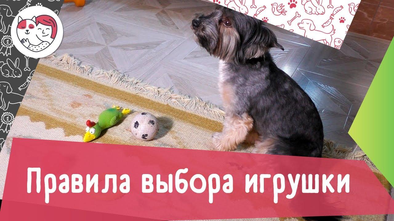 4 правила выбора игрушки для собаки