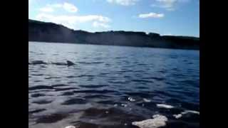 preview picture of video 'Year 36 Day 6 - Augusta Blackwood river dolphins'