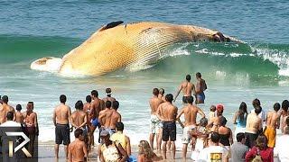 10 Strangest Ocean Phenomena You Won