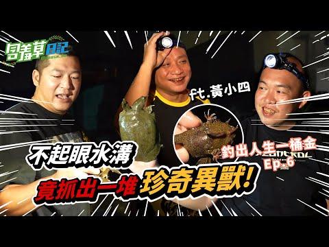 在台灣水溝裡爆釣外來魚種