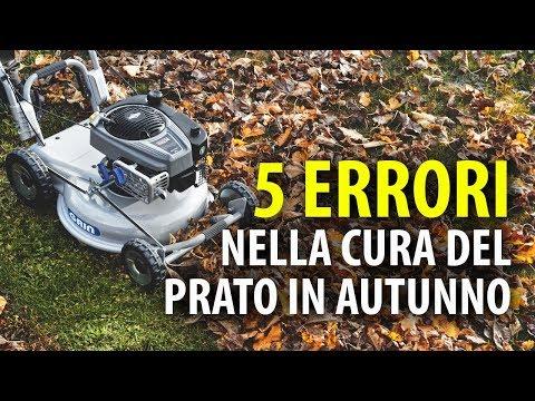 5 Errori nella Cura del Prato in Autunno