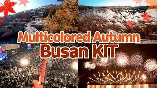 [Multicolored Autumn] Busan KIT