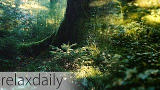 Light Music - instrumental, yoga, think, relax - N°098