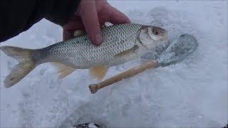 Отчеты о рыбалке на мостовом