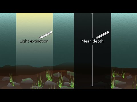 Film: Lake depth may govern the relationship between fish abundance and water color