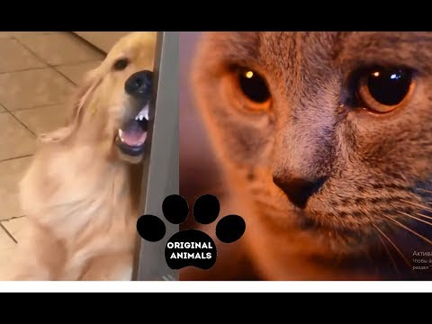 Original Animals #18. CUTE AND FUNNY ANIMALS VIDEO/ МИЛЫЕ И СМЕШНЫЕ ЖИВОТНЫЕ.