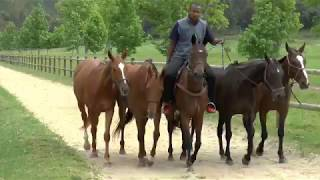 """How to """"Tie"""" Lead Ropes When Exercising Multiple Horses"""