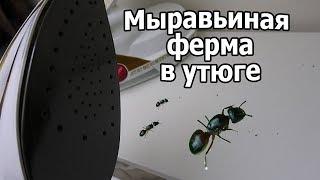 VLOG: Вова почти ползет / Живые муравьи в утюге! ФУУУ!!!