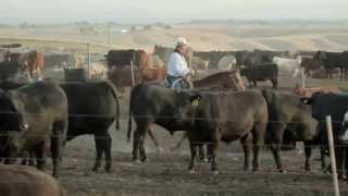 Agri Beef Co. Ranch to Table