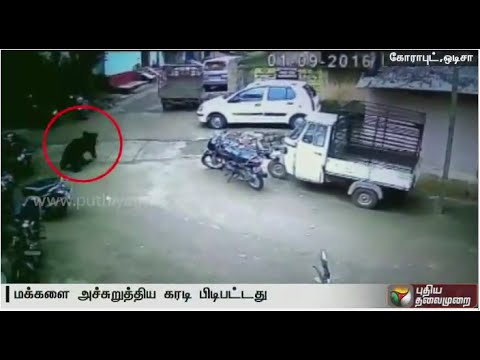 CCTV-footage-Wild-Bear-Enters-Residential-areas-threatens-people-in-odisha