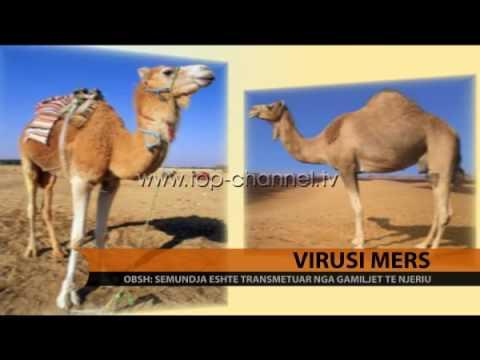 Hpv high risk genital warts