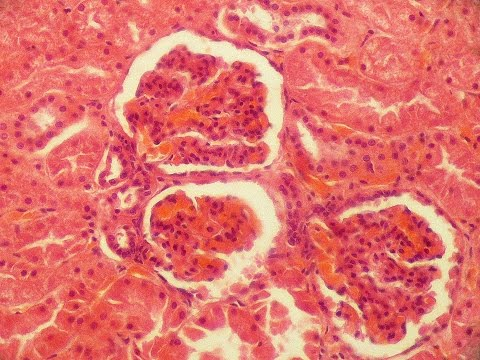 Про вирусный гепатит