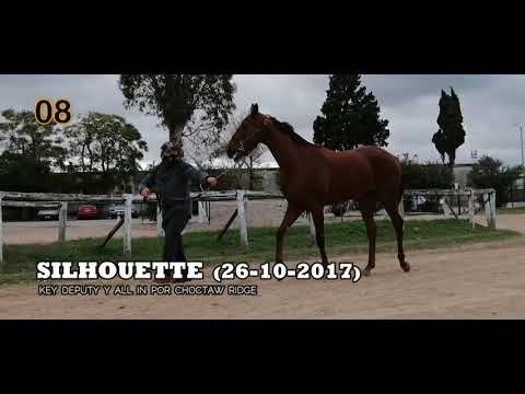 Lote SILHOUETTE (ARG)