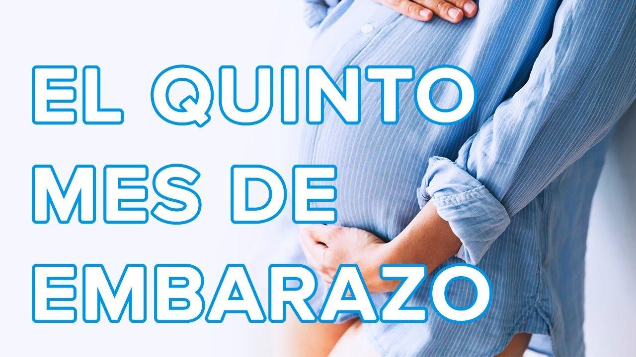 El quinto mes de embarazo | Así crece tu bebé, así cambia tu cuerpo ????