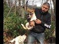 Download Video JACK RUSSELL PARS REİS VE ÇETESİYLE ORMANDAYIZ #jackrussell #dogoargentino #canecorso #kangal #dogo