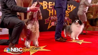 Beverly Hills Dog Show 2019: Best in Show (Full Judging)   NBC Sports
