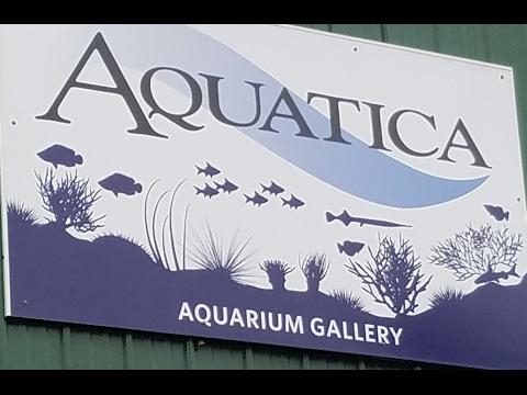 Aquatica Aquarium Gallery Tour