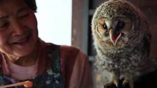 フクロウ「里親」はおばあちゃん ヒナ育て放鳥20年 | Kholo.pk