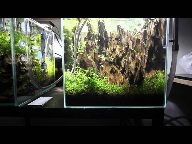 Aquascape Maintenance Nano Lived Planted Aquarium - Betta
