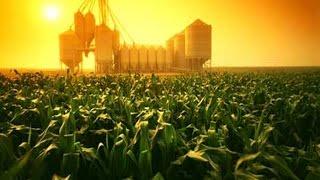 CORN - Grains, Analisi di Corn e Soybeans al 25 Novembre 2014