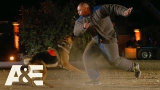 America's Top Dog: Live PD K9 Kato Takes on Team Bear (Season 1) | A&E