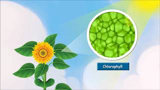 Class 4 Science - How do Plants Make Their Food? | Leaf the Food Factory