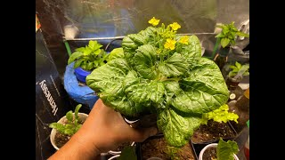 Complete Guide to Growing Vegetables Indoors And Harvest Many Times