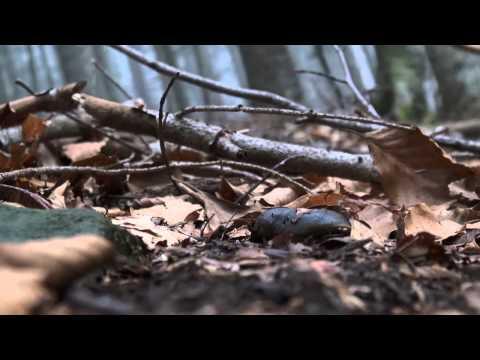Vassoio acetico per gambe da un fungo