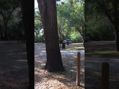 Video Of Brownville Park, FL