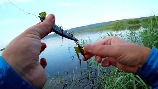Рыбалка в набережных челнах сегодня отчеты