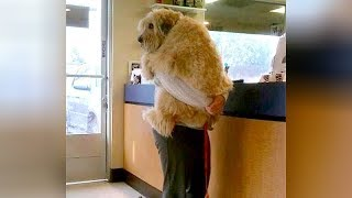 ANIMALS GO TO THE VET: Funniest REACTIONS - You