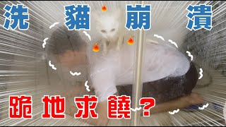 【SoybeanMilk】 Washing Two Cats - the MOST Ridiculous Cat Washing in History!!