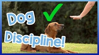 How to Correctly Tell a Dog Off! Dog Discipline VS. Punishment!