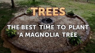 The Best Time to Plant a Magnolia Tree