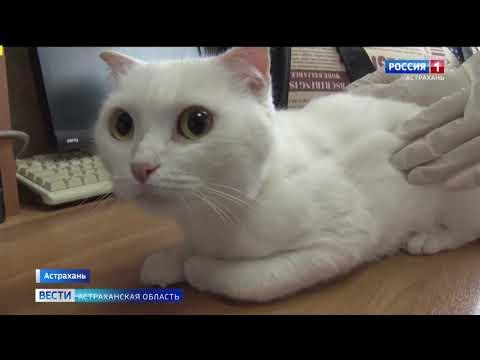 Управление Россельхознадзора по Ростовской, Волгоградской и Астраханской областям и Республике Калмыкия напоминает о правилах перевозки домашних животных