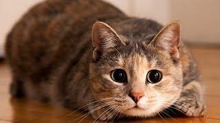 Смотреть онлайн Как коты прыгают с балкона на стол и в коробку