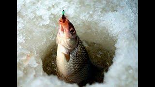 Клюет зимний карась! Зимняя рыбалка!!!