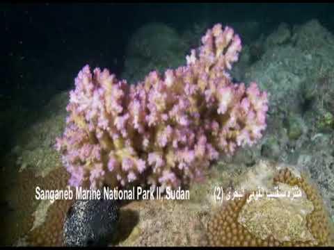 Sanganeb National Marine Park