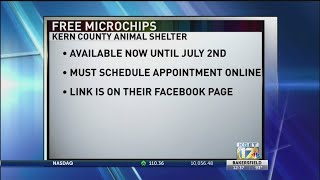 KCAS offering free pet microchips to county resident ahead of July 4 holiday