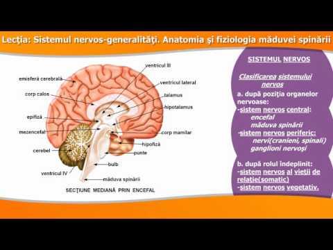 Paraziți ai controlului creierului uman