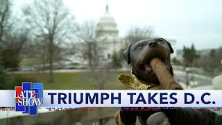 Triumph The Insult Comic Dog Goes To Washington To Cover Trump's Impeachment Trial