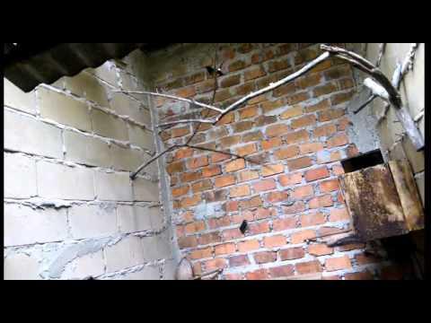 Video Melihat dari dekat cara beternak murai batu